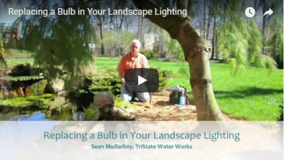 Replacing a Bulb in Your Landscape Lighting